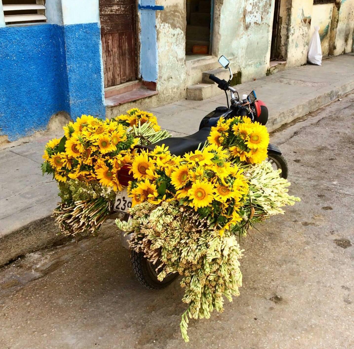 Çiçeklerin Ble Ayrı Güzel be Küba ya da Bize Öyle Geldi :)